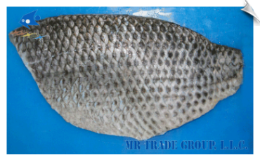 Tilapia Fillet, Non-CO Treated, Skin-On Full Fillet, Well Trimmed
